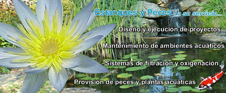 Estanques y peces for Peces y estanques